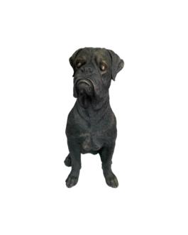 Cachorro G